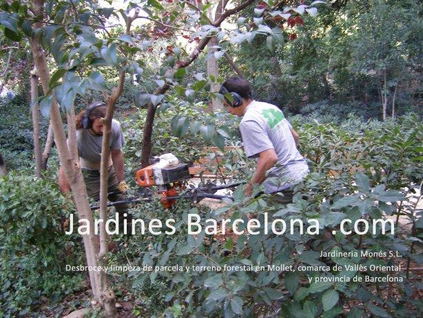 Jardineros realizando desbroce forestal de parcela en Mollet del Vall�s, provincia de Barcelona y comarca del Vall�s Oriental