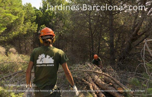 Jardineros realizando desbroce forestal de parcela en Esparraguera, provincia de Barcelona y comarca del Baix Llobregat