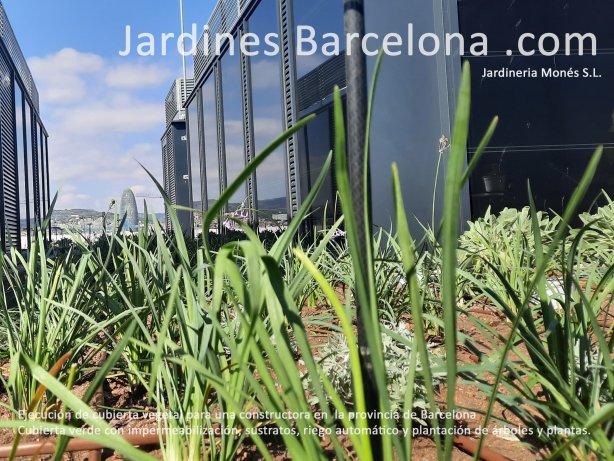 Ejecuci�n de cubierta vegetal y verde en un edificio para constructora en Barcelona con lamina drenante, mallas, gravas, sustratos i plantaciones