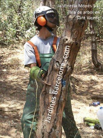 Jardinero de Jardineria Mon�s ejecutando la tala de arbol con medios manuales y mec�nicos en la poblaci� de Esplugues de Llobregat, comarca del Baix llobregat y provincia de Barcelona