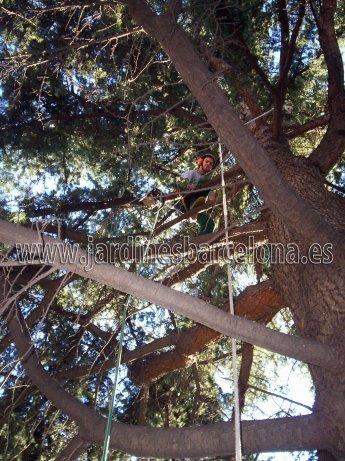 Jardineria Mon�s ofrece sus servicios de tala o poda de arboles y arbustives al Maresme, Barcelona, Baix Llobregat i Vall�s