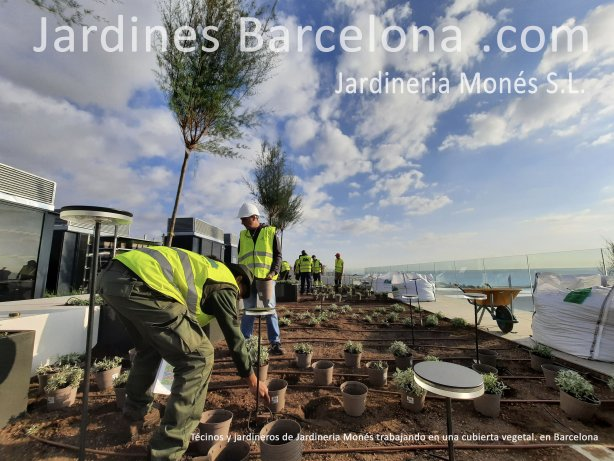 Jardineria Mon�s cuenta con un equipo de t�cino y de jardineross cualificados y especialitzados en cubiertas verdes y vegetales.