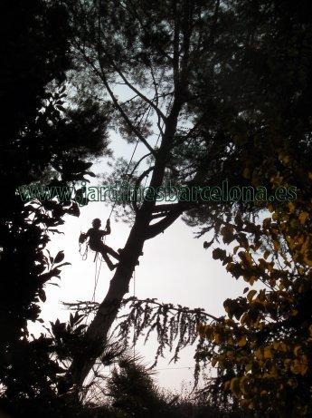 Jardineria Mon�s ofrece sus servicios de tala o poda de arboles y arbustives en las poblaciones de Alella, Badalona, Montgat, Tiana, Tei�, Masnou, Matar�, Cabrils, Arenys, Premi�, Vilassar y Sant Vicen� de Montalt