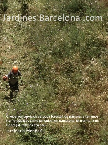 Jardineria Mon�s oferece servicios de desbroce forestal de parcelas y terrenos, tanto p�blicos com privados. Realizamos debroces en Barcelona, el Maresme, Baix Llobregat y en el Vall�s