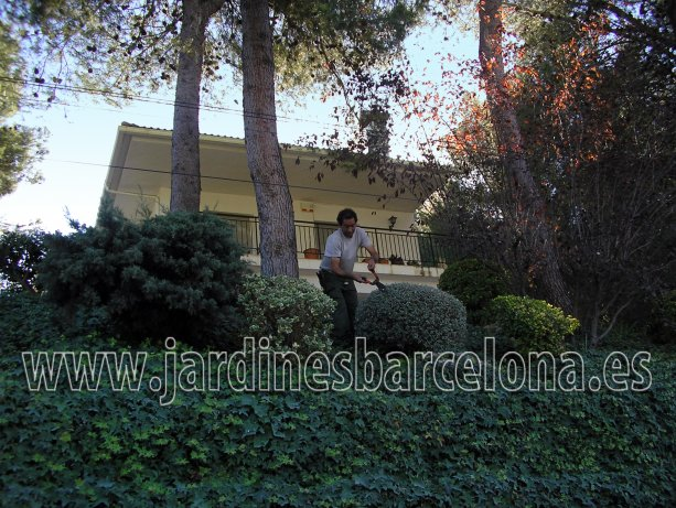 Mantenimiento jardines jardin plantas jardineria patio Barcelona jardinero terrazas exteriores Badalona Terrassa Valldoreix Valles Sant Vicen� Montalt Andreu Llavaneres Sabadell Alella Cabrils Premia Cabrera Llobregat Maresme