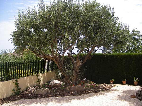 Jardines ecol gicos jardiner a sostenible con poco - Jardines con poco mantenimiento ...